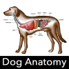Dog Anatomy : Canine Anatomy Giveaway