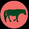Chincoteague Pony Names Giveaway