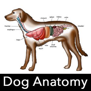 Dog Anatomy : Canine Anatomy Giveaway